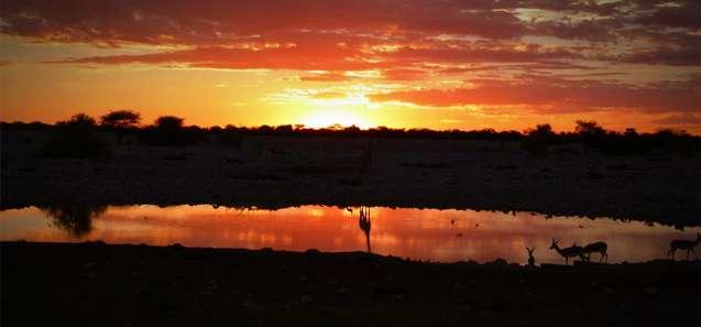 Sunset at the Water hole - Etosha, Namibia - Trans Africa