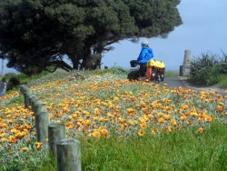 Sunshine and Flowers, Bussleton, Western Australia - Cycling Across Australia