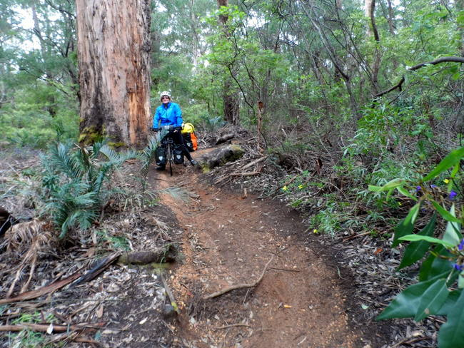 Detour off the Rail trail between Cowaramup and Margaret River - Cycling Across Australia