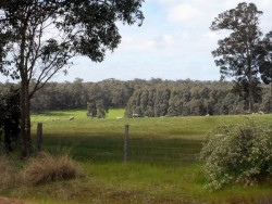 Pastures, Margaret River, Western Australia - Cycling Across Australia