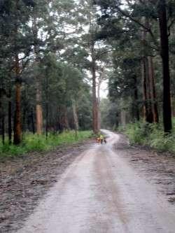 Road near Fernhook Falls, Western Australia - Cycling Across Australia