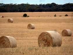 Back in Civilisation - Farmland near Penong, South Australia - Cycling Across Australia