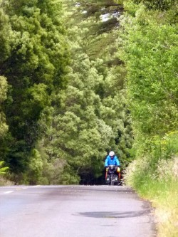 Riding through the forest - Great Ocean Road, Victoria - Cycling Across Australia