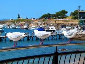 A chorus line - Wollongong - NSW - Cycling Across Australia