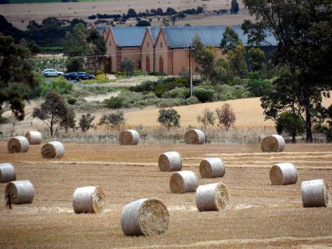 Histroic Vineyard, South Australia - Cycling Across Australia