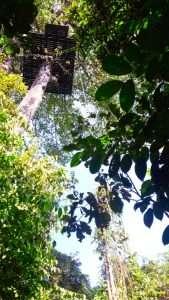 Siem Reap angkor park Ziplines