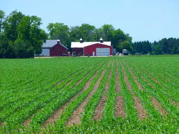 Soybeans, Ohio